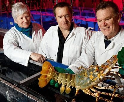 TASMANIAN SCIENTISTS IN WORLD-FIRST LOBSTER BREAKTHROUGH