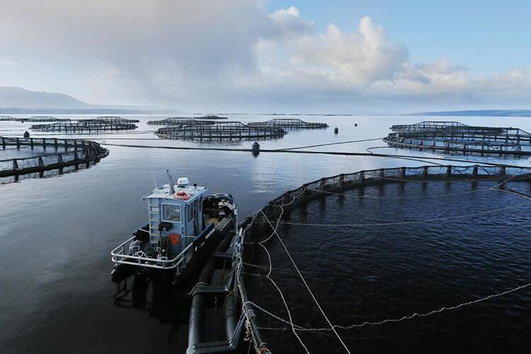 home-aquaculture