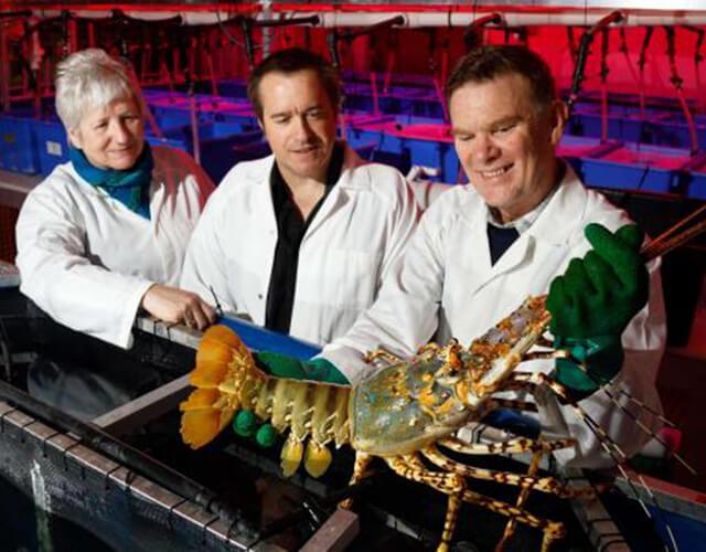 home-recirculating-aquaculture-systems