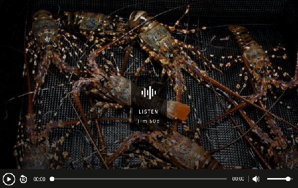 commercialising-rock-lobster-hatchery-in-tasmania