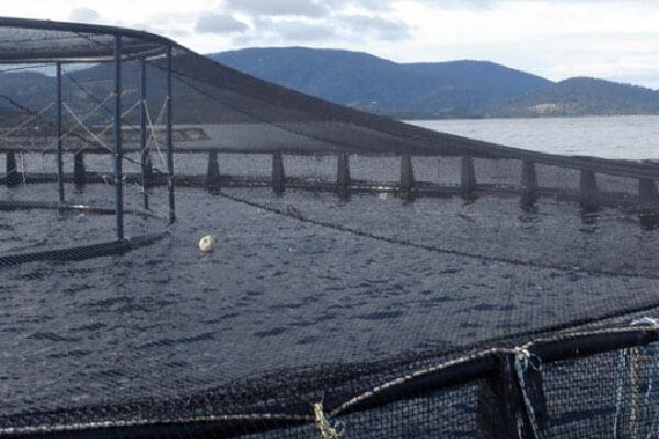 fish-pen-nets